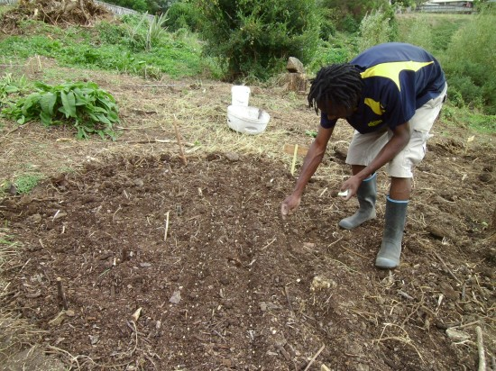 Fungai started his garden from bare ground in March 2012