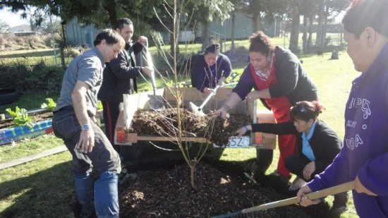 fruit tree planting at SWPICS, Tokoroa