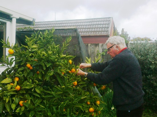 pick citrus fruit as you need them