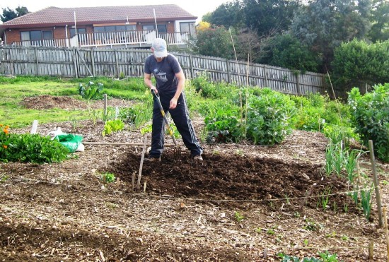 Paul digging the soil ready for potatoes