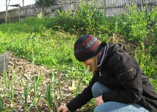 Angela weeding garlic at Grandview Community Garden